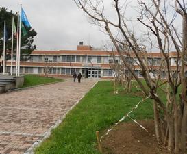 Le piante trapiantate lungo il viale di accesso al municipio