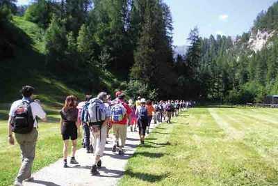 gruppo di camminatori di spalle su un percorso in mezzo ai boschi